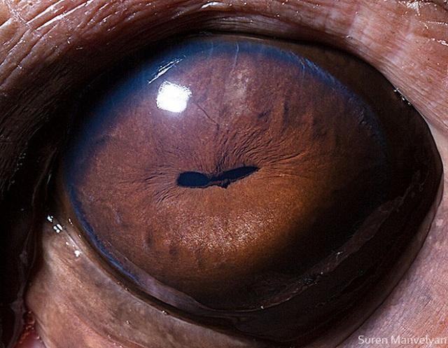 Giật mình trước vẻ đẹp kỳ lạ đến từ mắt của các loài động vật - Ảnh 12.