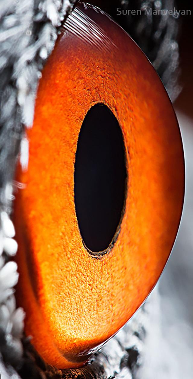 Giật mình trước vẻ đẹp kỳ lạ đến từ mắt của các loài động vật - Ảnh 14.