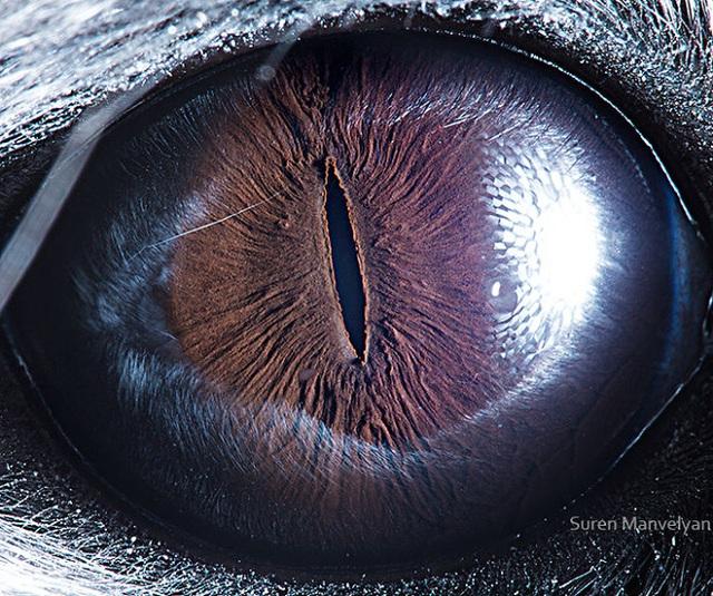 Giật mình trước vẻ đẹp kỳ lạ đến từ mắt của các loài động vật - Ảnh 15.