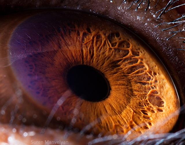 Giật mình trước vẻ đẹp kỳ lạ đến từ mắt của các loài động vật - Ảnh 16.