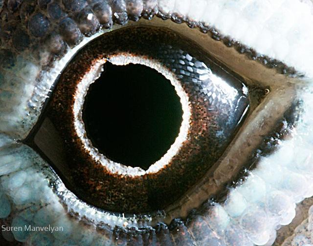 Giật mình trước vẻ đẹp kỳ lạ đến từ mắt của các loài động vật - Ảnh 17.