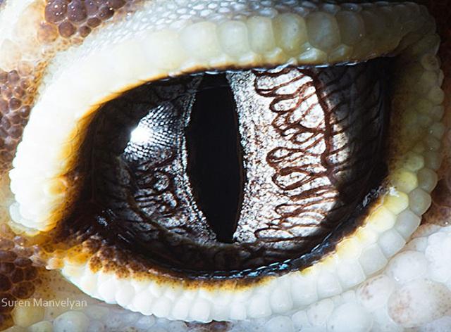Giật mình trước vẻ đẹp kỳ lạ đến từ mắt của các loài động vật - Ảnh 18.