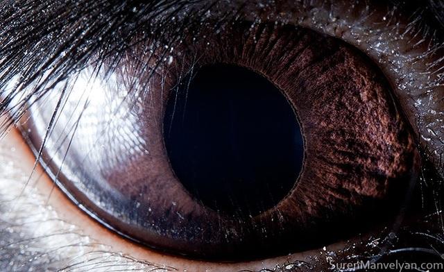 Giật mình trước vẻ đẹp kỳ lạ đến từ mắt của các loài động vật - Ảnh 19.