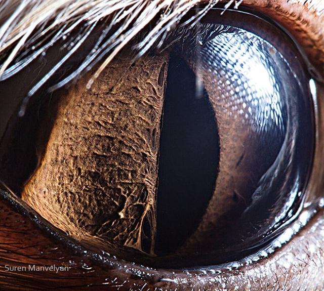 Giật mình trước vẻ đẹp kỳ lạ đến từ mắt của các loài động vật - Ảnh 20.