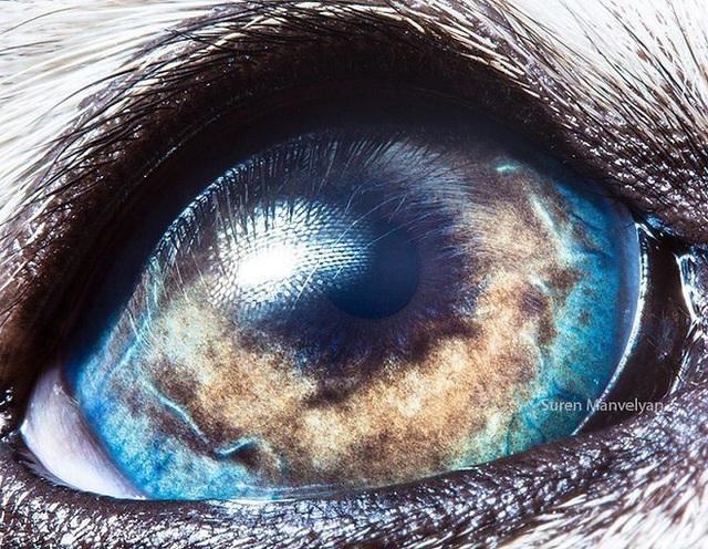 Giật mình trước vẻ đẹp kỳ lạ đến từ mắt của các loài động vật - Ảnh 3.