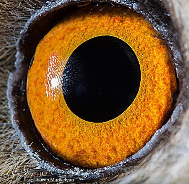 Giật mình trước vẻ đẹp kỳ lạ đến từ mắt của các loài động vật - Ảnh 4.