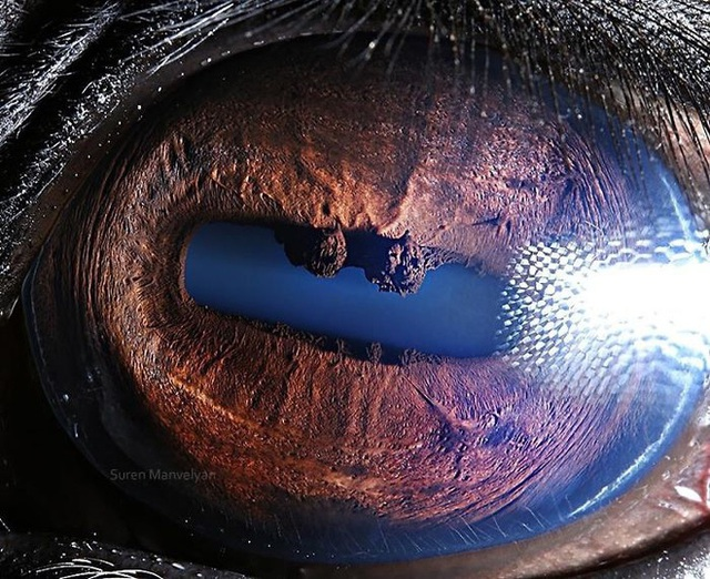 Giật mình trước vẻ đẹp kỳ lạ đến từ mắt của các loài động vật - Ảnh 5.