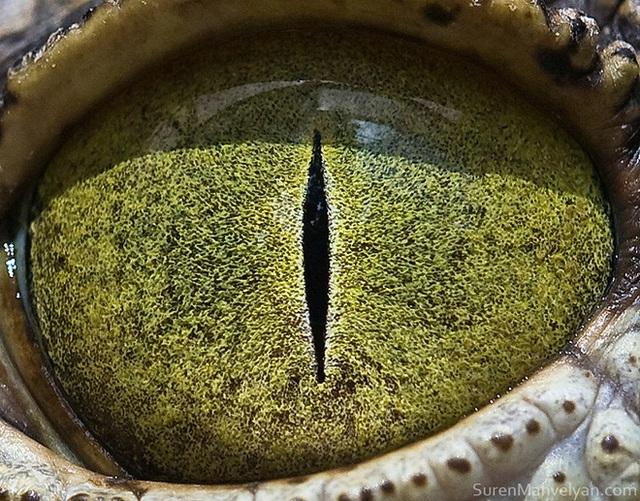 Giật mình trước vẻ đẹp kỳ lạ đến từ mắt của các loài động vật - Ảnh 6.