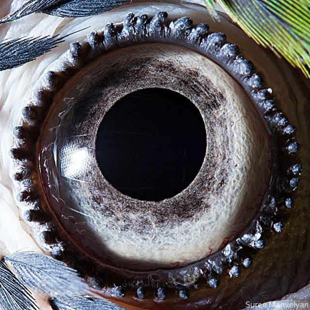 Giật mình trước vẻ đẹp kỳ lạ đến từ mắt của các loài động vật - Ảnh 9.