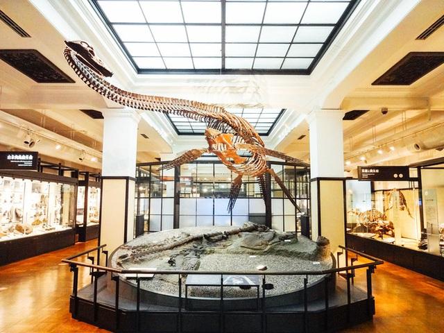 Chú khủng long của Nobita đã trở thành hiện thực, một loài khủng long mới phát hiện ở Trung Quốc được đặt tên theo nhân vật này - Ảnh 5.