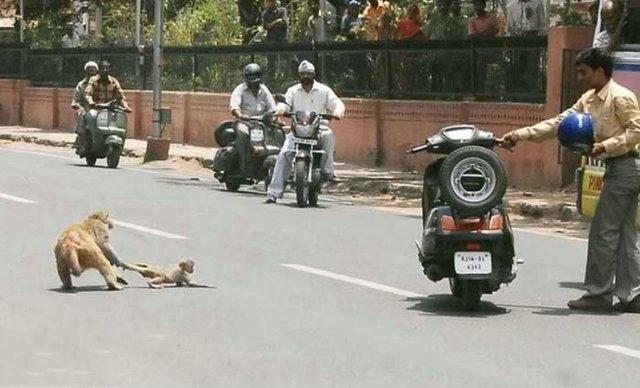 Loạt ảnh dí dỏm chứng tỏ vì sao Ấn Độ lại là đất nước hài hước nhất thế giới - Ảnh 5.