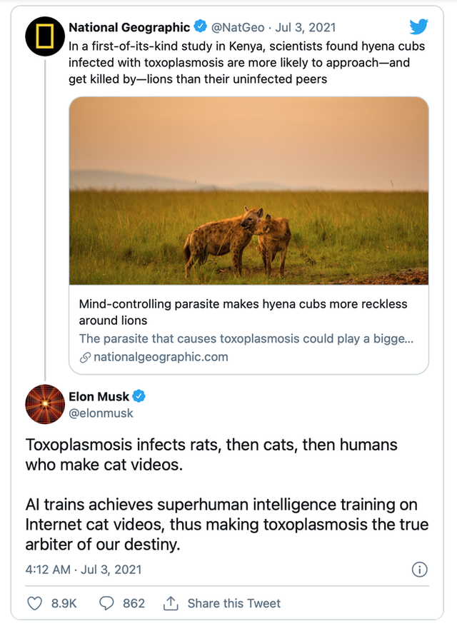 Elon Musk cho rằng ký sinh trùng tẩy não khiến con người tạo ra AI - Ảnh 1.