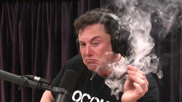Elon Musk cho rằng ký sinh trùng tẩy não khiến con người tạo ra AI - Ảnh 2.