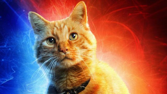 5 siêu động vật bản lĩnh không kém các siêu anh hùng trong vũ trụ điện ảnh Marvel - Ảnh 5.
