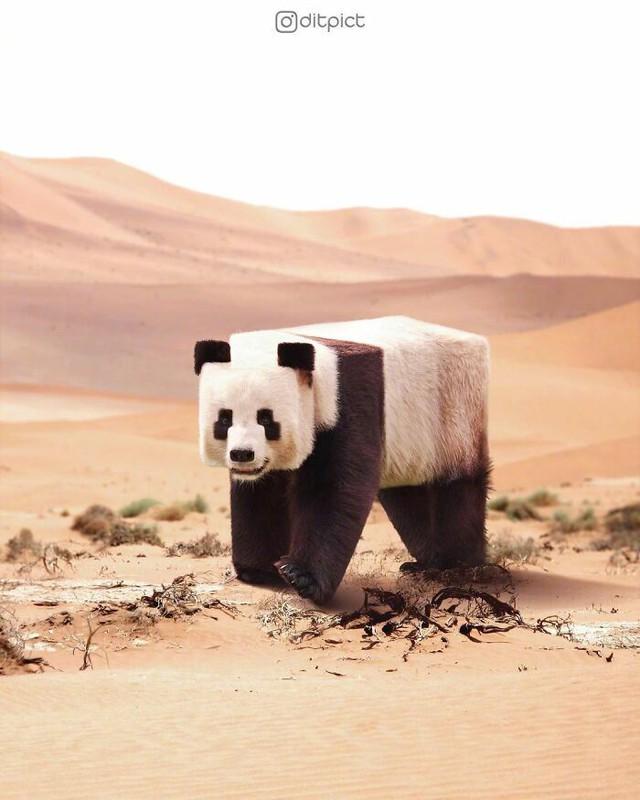 Sẽ ra sao nếu các loài động vật đều có tạo hình khối hộp vuông như Minecraft? - Ảnh 2.