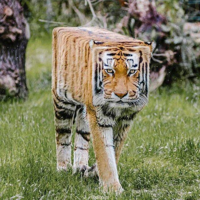 Sẽ ra sao nếu các loài động vật đều có tạo hình khối hộp vuông như Minecraft? - Ảnh 3.