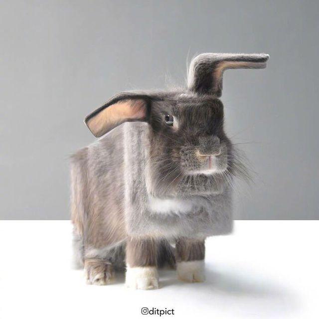 Sẽ ra sao nếu các loài động vật đều có tạo hình khối hộp vuông như Minecraft? - Ảnh 9.