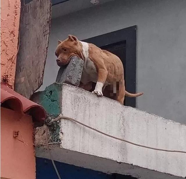 Ghét bị làm phiền, người đàn ông huấn luyện cún cưng ném gạch vào người gõ cửa khiến CĐM sửng sốt - Ảnh 2.