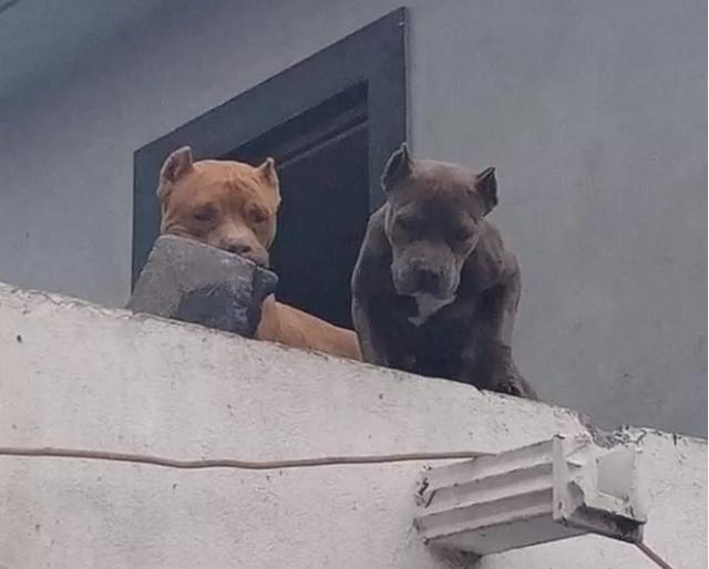 Ghét bị làm phiền, người đàn ông huấn luyện cún cưng ném gạch vào người gõ cửa khiến CĐM sửng sốt - Ảnh 3.