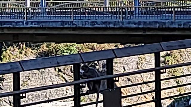 Nữ streamer bàng hoàng vì bị một chú khỉ cướp đồ ăn, thưởng thức trước mặt như để trêu tức trên sóng - Ảnh 3.
