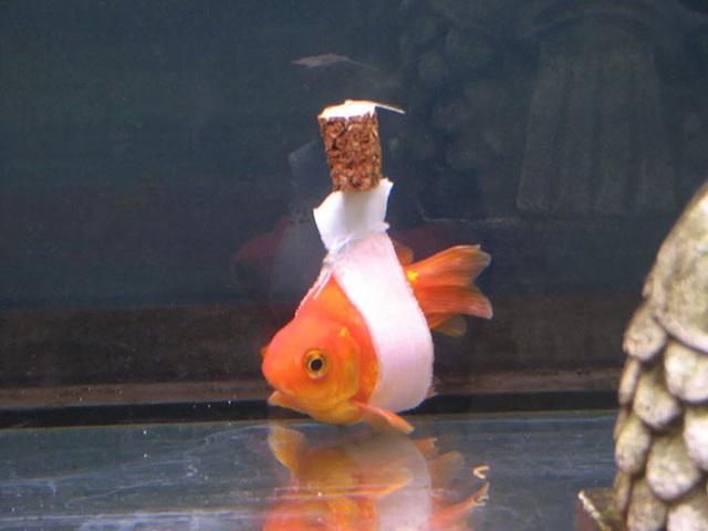 cá chống nạng phải ngồi xe lăn Photo-2-16308712865301376434654