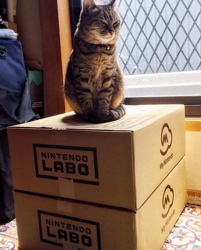 """Gương mặt sát thủ mang ý nghĩa chiếm hữu độc quyền chiếc Nintendo Labo của """"hoàng thượng""""."""