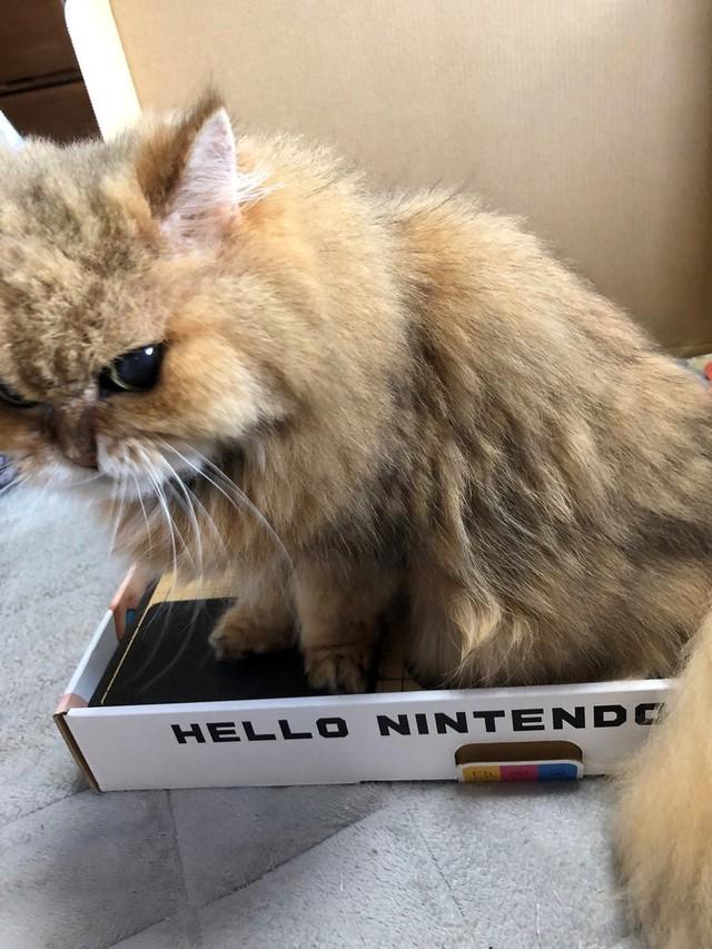 """""""Cái này cho em chơi được không?"""""""