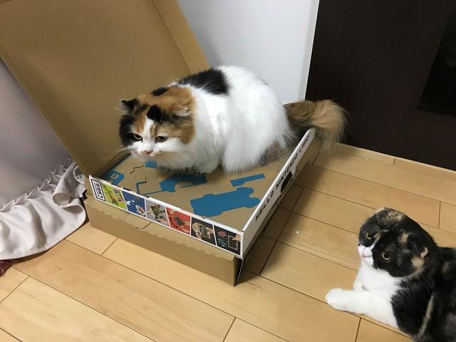 """…. """"Mèo nào nhanh mèo đó được""""."""