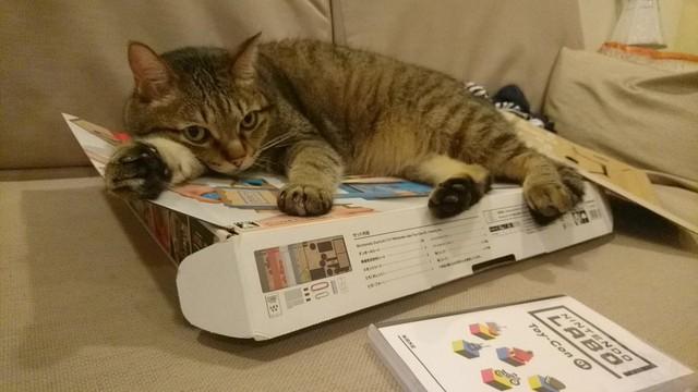 """""""Nhìn cái gì, biến ra chỗ khác. Chỗ này có mèo nằm rồi!"""""""