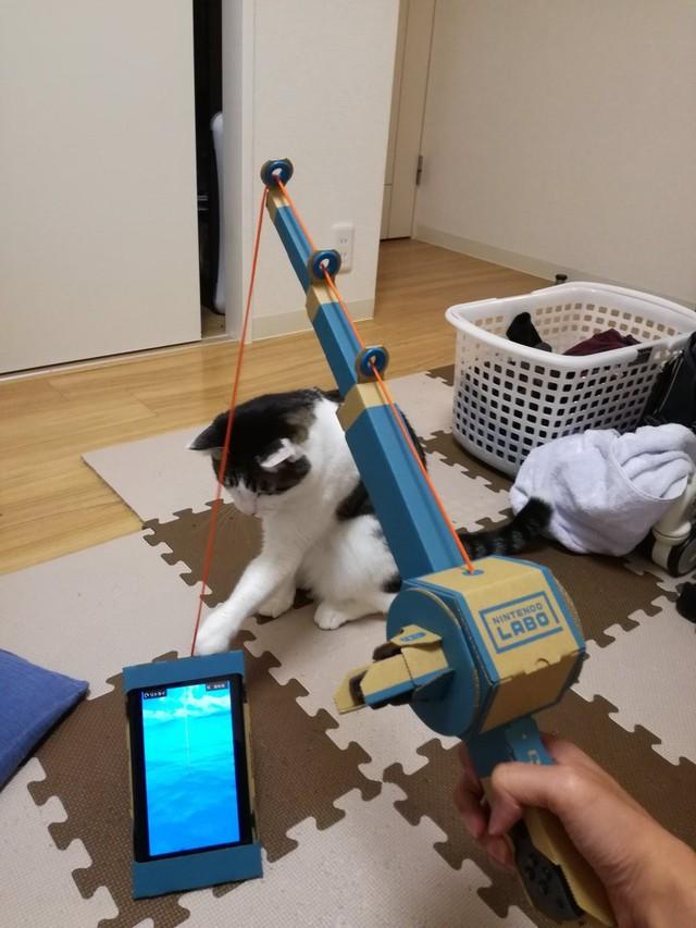 Câu mèo chưa bao giờ dễ đến thế.
