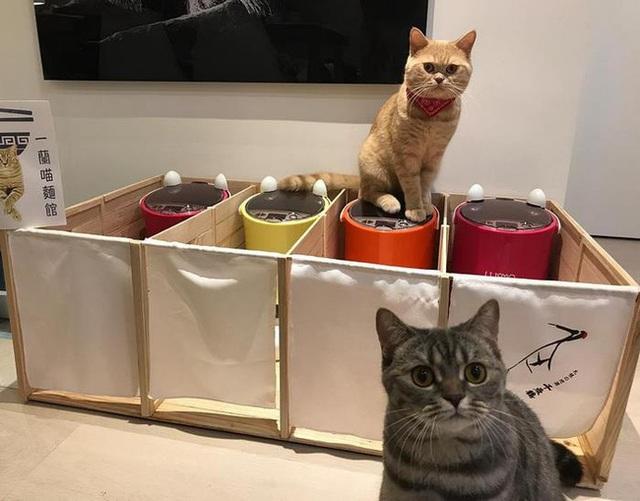 Mèo bố béo phì tranh ăn hết phần con, ông bà chủ liền nghĩ ra cách cực hay giúp nó giảm cân - Ảnh 5.