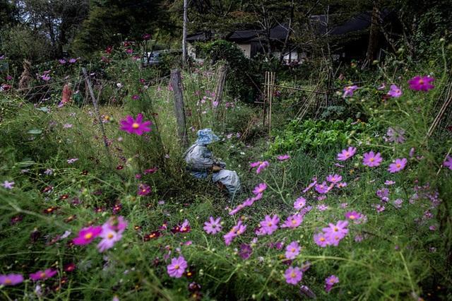 Ngôi làng vắng bóng trẻ thơ tại Nhật Bản: 18 năm không có một đứa trẻ nào ra đời, số búp bê nhiều gấp 10 lần số dân làng - Ảnh 6.