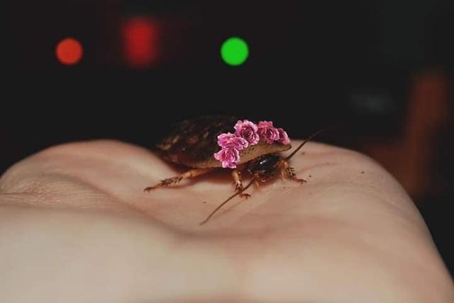 Đội vòng hoa cho gián vì muốn nó xinh xắn, chủ Pet bị chất vấn: Hết thứ để nuôi à? - Ảnh 5.