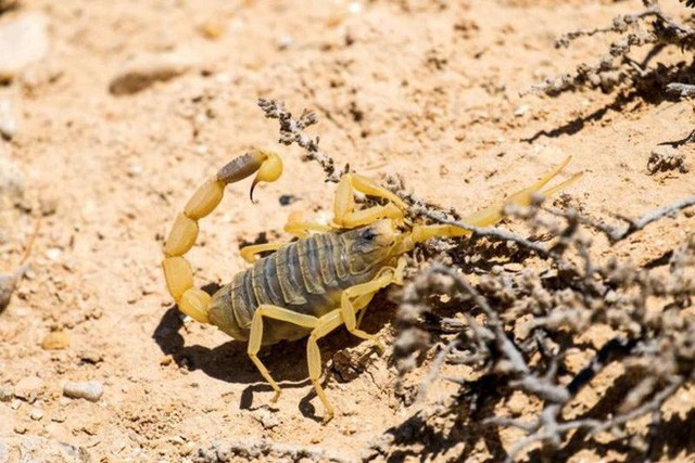 15 sinh vật có nọc độc đáng sợ nhất trên Trái Đất - Ảnh 3.