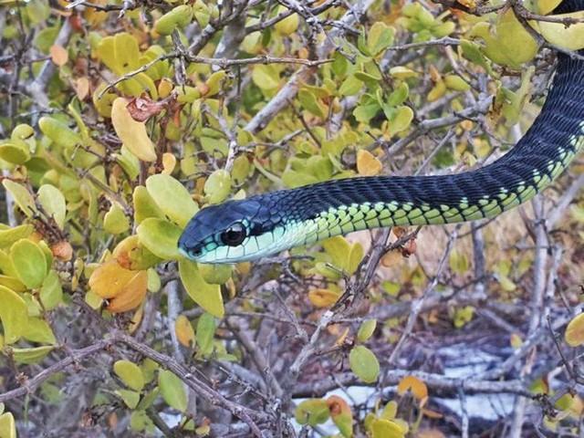 15 sinh vật có nọc độc đáng sợ nhất trên Trái Đất - Ảnh 6.