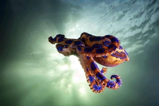15 sinh vật có nọc độc đáng sợ nhất trên Trái Đất - Ảnh 7.