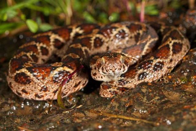 15 sinh vật có nọc độc đáng sợ nhất trên Trái Đất - Ảnh 8.