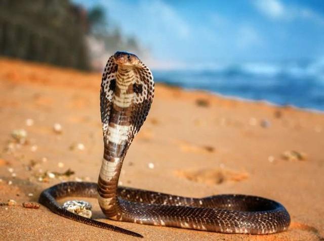 15 sinh vật có nọc độc đáng sợ nhất trên Trái Đất - Ảnh 9.