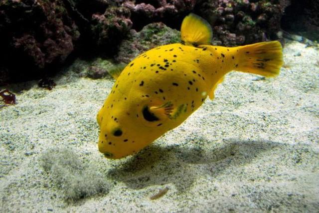 15 sinh vật có nọc độc đáng sợ nhất trên Trái Đất - Ảnh 10.