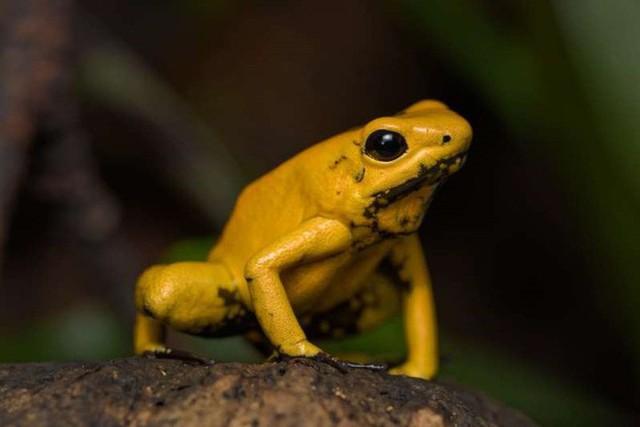 15 sinh vật có nọc độc đáng sợ nhất trên Trái Đất - Ảnh 12.