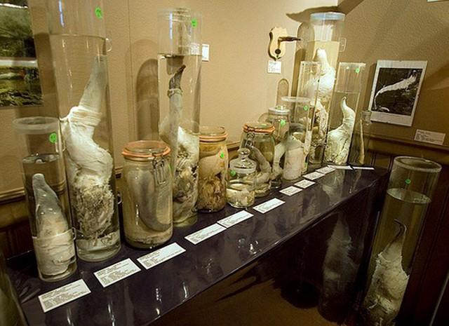 6 viện bảo tàng trưng bày những hiện vật kinh dị ngoài sức tưởng tượng - Ảnh 5.