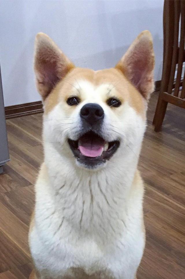 Giữa một rừng nhà sáng tạo nội dung siêu ngầu của Lotus, từ đâu hiện ra một chú chó, hoá ra là Momo Inu lừng danh - Ảnh 5.