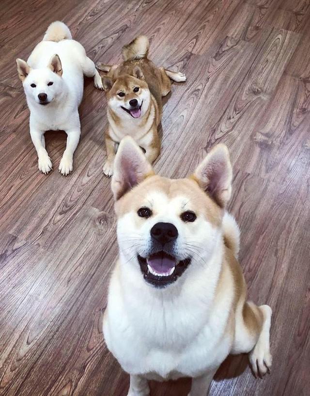 Giữa một rừng nhà sáng tạo nội dung siêu ngầu của Lotus, từ đâu hiện ra một chú chó, hoá ra là Momo Inu lừng danh - Ảnh 7.
