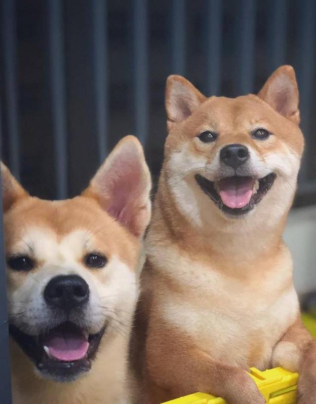 Giữa một rừng nhà sáng tạo nội dung siêu ngầu của Lotus, từ đâu hiện ra một chú chó, hoá ra là Momo Inu lừng danh - Ảnh 8.
