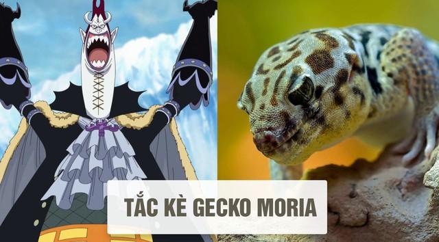 One Piece: Tên của các nhân vật và loài vật tương ứng với họ ở đời thật - Ảnh 13.
