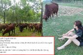 Tuyển người chăn bò với mức lương ngang nhân viên văn phòng, bài đăng khiến cộng đồng mạng xôn xao bàn tán