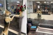 Nửa đêm, chú chó lạ tự bước vào sở cảnh sát để báo án về vụ mất tích của... chính mình