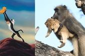 Lion King đời thực là đây: Chú khỉ đầu chó vừa leo trèo vừa bế sư tử con, quyết không buông tay