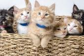 Kênh truyền hình Mỹ phát video chó mèo 94 tiếng liên tục để khán giả đỡ stress trong mùa Covid-19