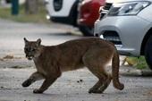 """Tranh thủ lúc loài người đang ở nhà cách ly xã hội, hàng loạt loài động vật đều đổ bộ """"xâm chiếm"""" đường phố"""